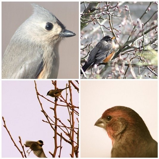 birdcollage