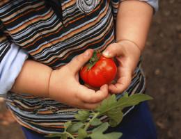 Child working in the garden