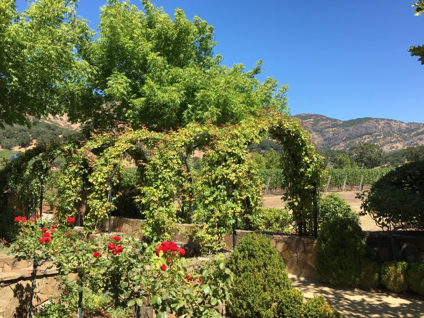 Cliff Lede winery