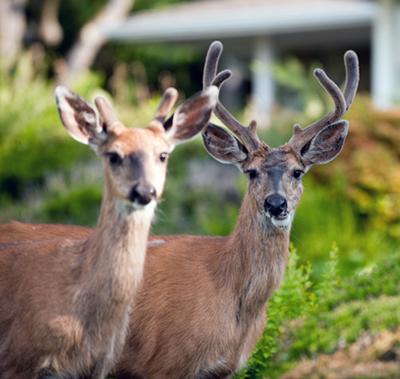 deer_house