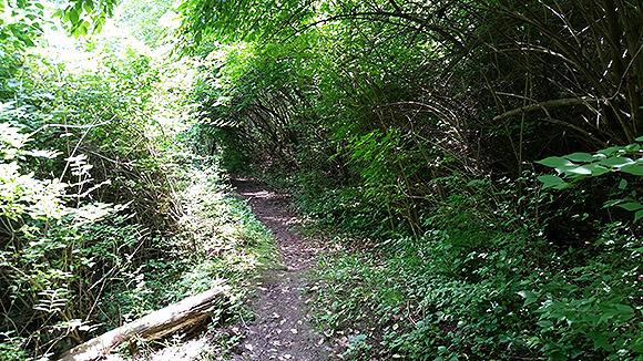 cache-path