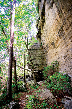 Allegheny National Forest is about two hours' drive from here and stretches across four counties.