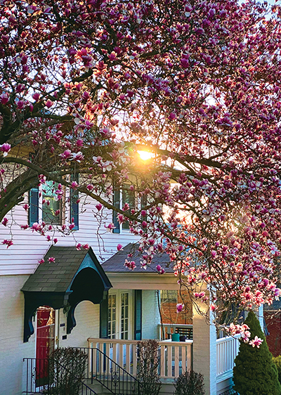 Home with blooming trees.