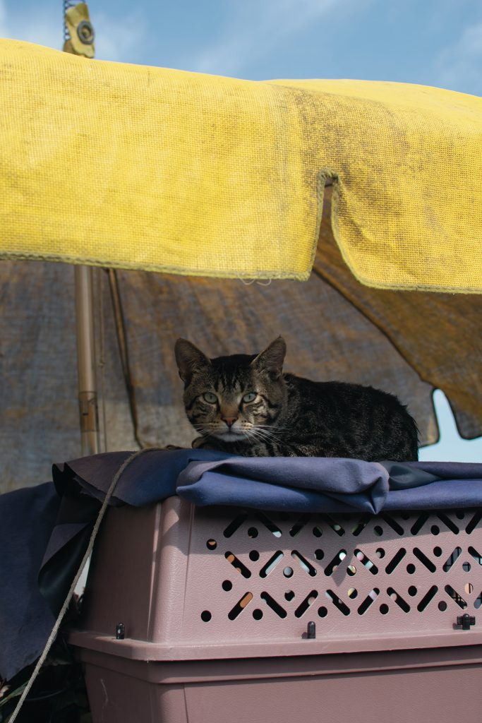 A tabby cat sits on top of its carrier under a yellow umbrella.