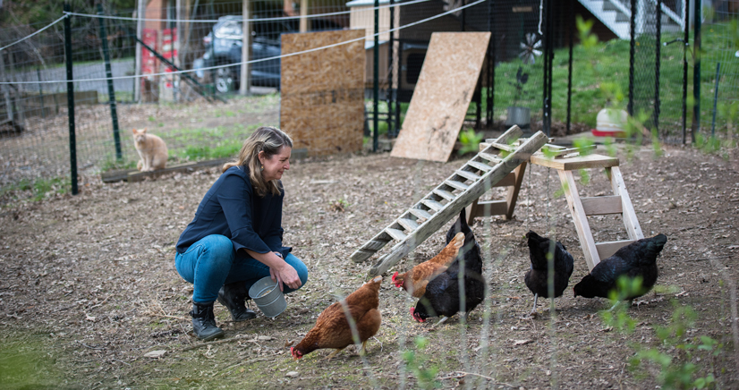 Marina Siegert feeds a few of her chickens in her yard, while a small cat watches from behind a fence.