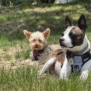 Emily Radamis' dogs sitting in the sunlight in her backyard.